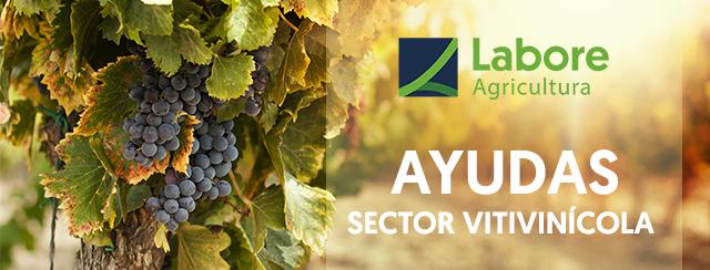 Convocadas subvenciones para productos vitivinícolas